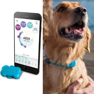 Dog Health & Fitness Tracker