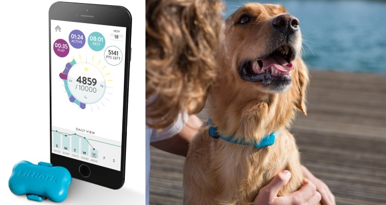 Dog Health Fitness Tracker