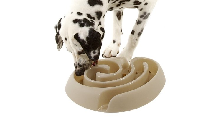 slow feed bowls for dogs