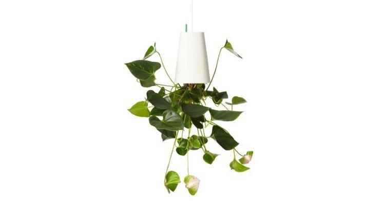 Upside Down Plant Pots