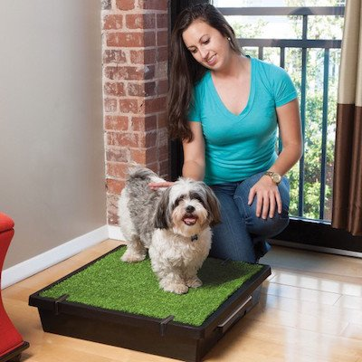 Dog Litter Box