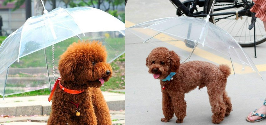 dog umbrella 1