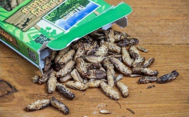 dried cricket crisps