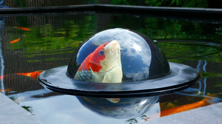 Floating Fish vieweing Dome
