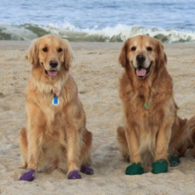 Wellies for Dogs